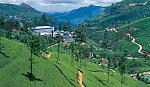 tea plantations.in nuwaraeliya hills.