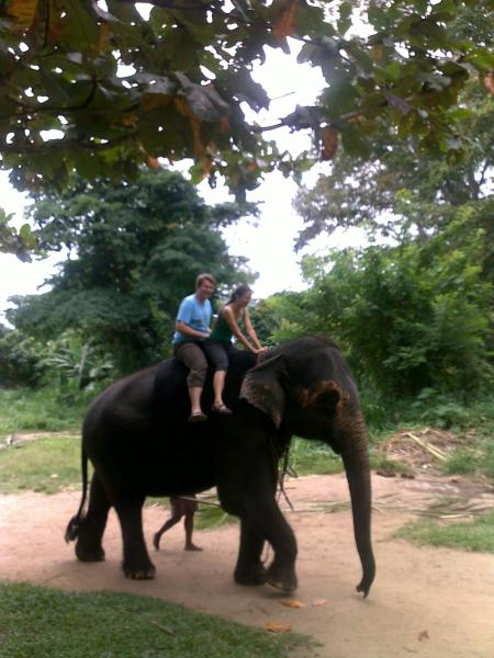Elephants riding