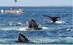 Blue Whale Watching at mirissa beach